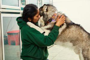 east bay dog boarding training daycare