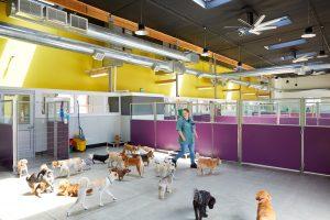 happy hound jobs employment oakland