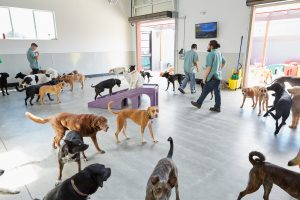 oakland and east bay dog daycare