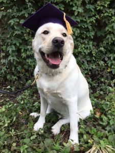 large dog training oakland and east bay