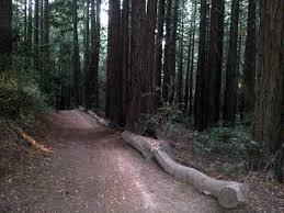 Redwood City Dog Friendly Parks