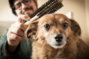 oakland dog grooming