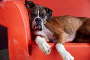 oakland east bay dog boarding
