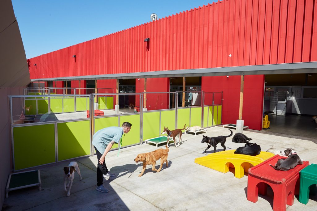 dog daycare with outside play oakland