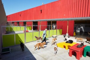 dog daycare with outside play space oakland