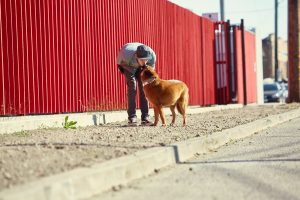 happy hound services