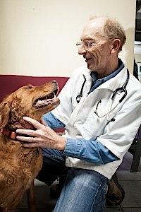 oakland dog clinic