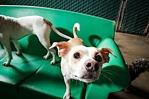 oakland dog boarding, training and daycare rates