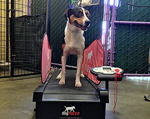 dog treadmill fitness program oakland