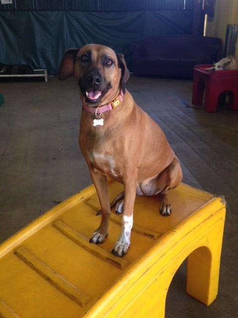 kekoa at happy hound