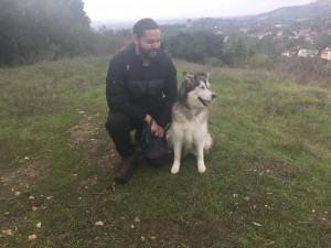 happy hound dog walking services