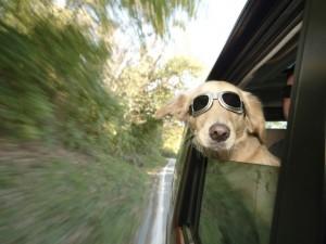 Dog-in-Car-1024x768