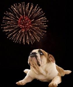 dog-fireworks-252x300