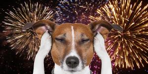 dog-fireworks
