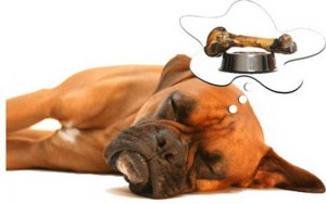 dog-dreaming
